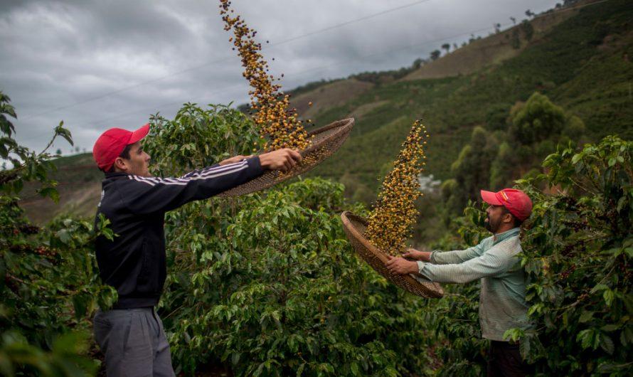Seeking to rehabilitate the countryside in Guatemala